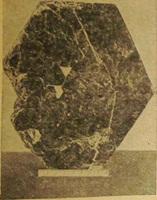 Рис. 64. Кристалл биотита