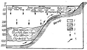 Схема фосфоритообразования — осаждения фосфатов из морской воды в зоне шельфа