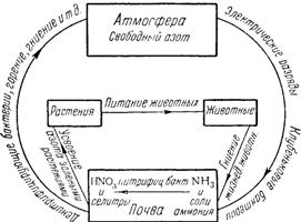 Схема круговорота азота в природе