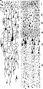 Морфология нервной системы
