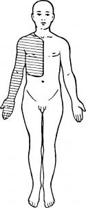 Тоническая диагностика кожно мышечная чувствительность