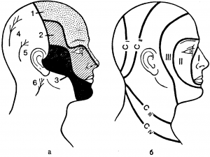Схема кожной и сегментарной иннервации лица