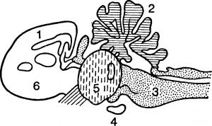 Нервная система птицы