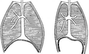 Изменение грудной клетки при дыхании
