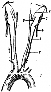 Схема депрессорного нерва аорты и сонной артерии