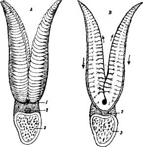 Органы дыхания рыб