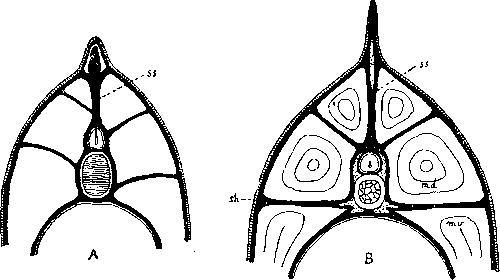 Скелет рыб