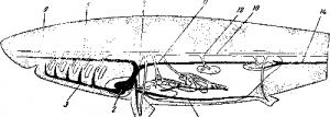 Органы кровообращения рыб