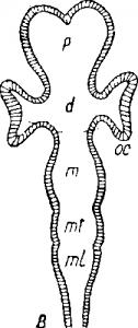 Нервная система позвоночных