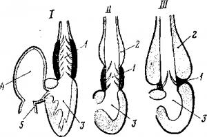 Продольный схематический разрез через сердце различных рыб