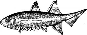 Древние рыбообразные