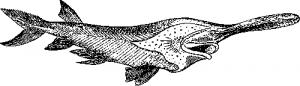 Веслонос—Polyodon folium