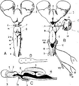Нервная система акулы