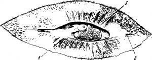 Химера рыба