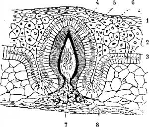 Акула строение