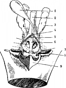 Нервная система ящерицы