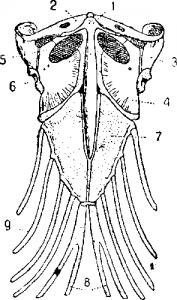 Строение черепа ящерицы