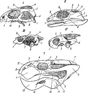 Строение черепов различных рептилий
