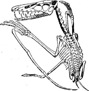 Крылатый ящер