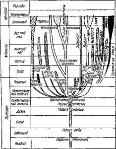 Схема эволюции рептилий