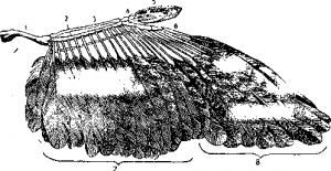 Оперение птиц и строение пера