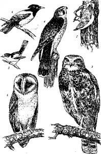 Польза и вред птиц