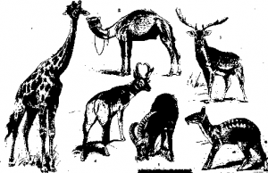 Копытные млекопитающие