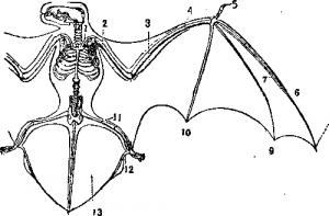 Эволюция летучих мышей