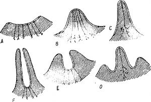 Кожные железы млекопитающих
