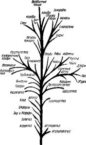 Эволюционное развитие птиц