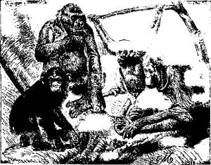 Антропоморфные обезьяны