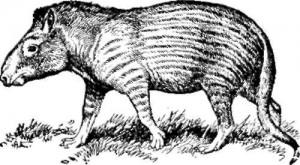 Копытное млекопитающие фенакод