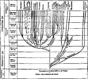 Схема эволюции различных групп млекопитающих