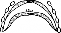 Положение диафрагмы во время вдоха и выдоха