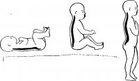 Части скелета человека