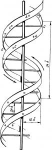 Клетка Схема строения молекулы ДНК