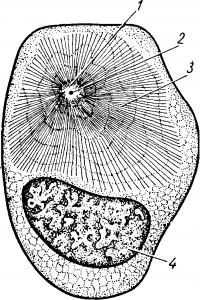 Деление клеток