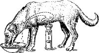 Мнимое кормление эзофаготомированной собаки с фистулой желудка