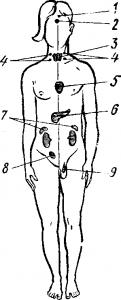 Внутренняя секреция человека