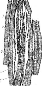 Кожныйидвигательный анализаторы