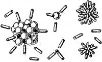 Истинные растворы, хлорид натрия